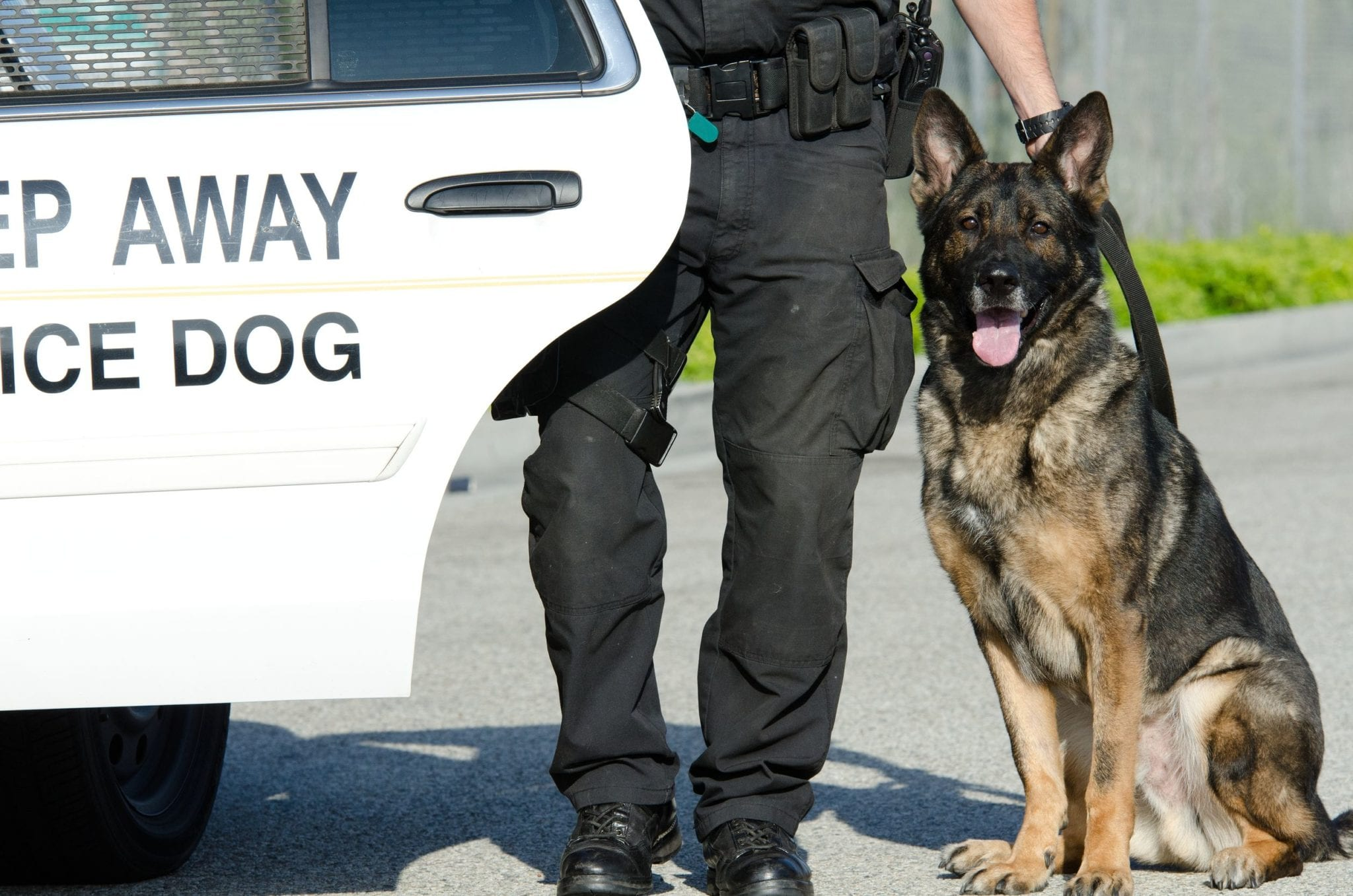 What Rules Does Texas Have About Police Dogs and Drug Charges?